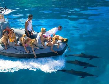 tours-raft-dolphins